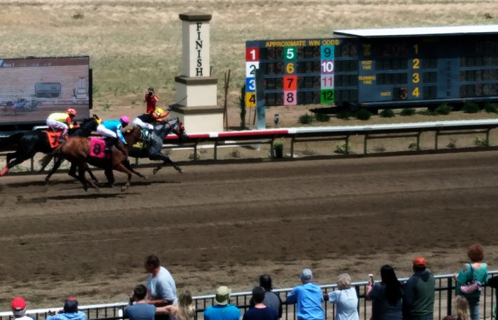 Horses crossing a finish line while fans watch