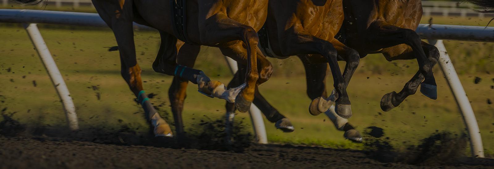 off track horse betting phoenix az